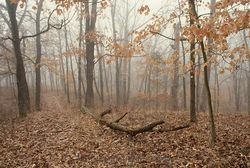 D0765I-Late-fall-woods-series