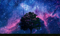 Bigstock-a-tree-in-a-field-with-space-b-41769235