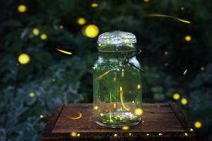 Fireflies-1500x1000